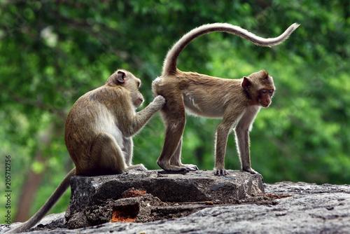 Poster monkeys cute