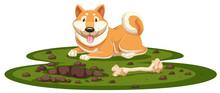 A Shiba Dog   Sticker