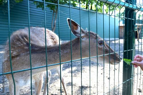 Aluminium Kangoeroe deer in the zoo