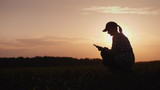 A female farmer is working in the field at sunset. Studying plant shoots, using a tablet - 205727744