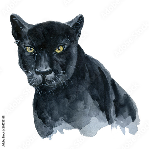 Watercolor black panther Wiledlife illustration - 205733169