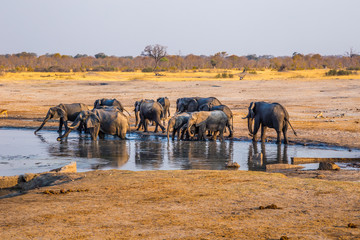Elephants gather by one of the remaining waterholes during a drought in Hwange National Park, zimbabwe. September 9. 2016.