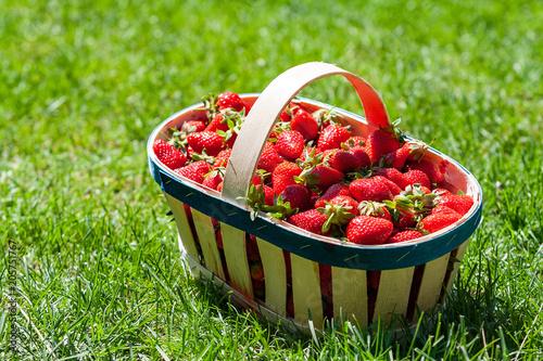 Foto Murales Basket of strawberries