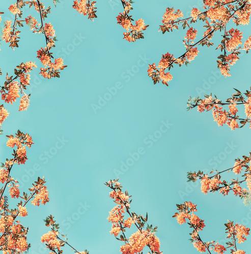 Orange blossom layout frame at blue background
