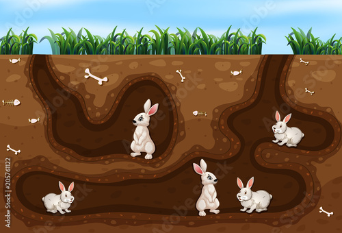 Fotobehang Kids Rabbit Family Living in the Hole