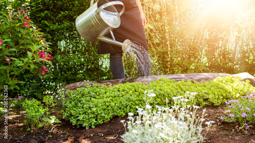Leinwandbild Motiv Unrecognisable woman watering flower bed using watering can. Gardening hobby concept. Flower garden image with lens flare.