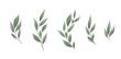 Vector set. Bay leaf. Green leaves on white background. Vector illustration.