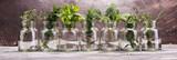 bunch of garden fresh herbs on grey board. - 205781993