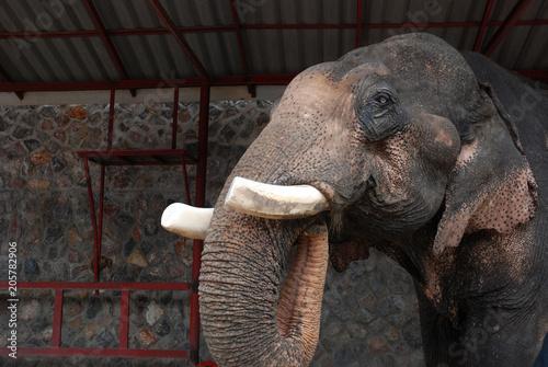 mata magnetyczna słoń jedzenia