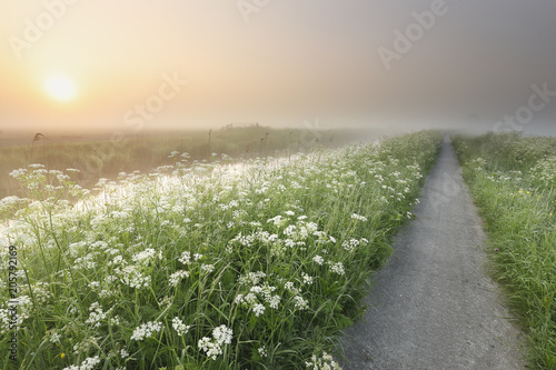 Foto Murales cycling path by river and wildflowers at sunrise
