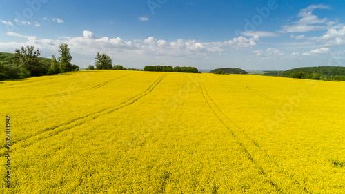 Fotobehang Oranje Aerial view of colorful rapeseed field in spring with blue sky in Ukraine.