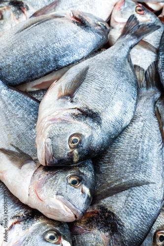 Foto Murales Fish. Fresh sea bream. Raw dorado fish