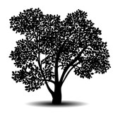 silhouette detached tree with leaves