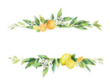 Watercolor vector banner of citrus fruits and leaves. - 205840592