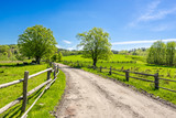 Rural landscape, grass field under blue sky in countryside scenery with country road - 205843538