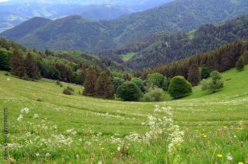 Plexiglas Pistache Berge in Täler im Schwarzwald