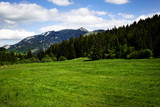 summer mountain landscape with limestone peak