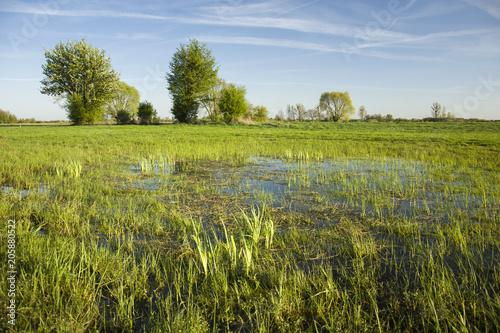 Plexiglas Pistache Wet meadows, trees and blue sky