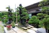 Bonsai art in the japanese garden style
