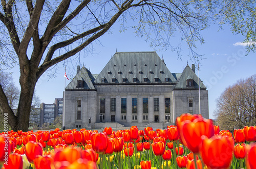 Fotobehang Canada Front view of Supreme Court of Canada, Ottawa, Canada with full bloom red tulips in front