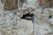 Quadro gekko, rettile, animale, natura, serpente, fauna, desolato, pietra, rocce, verde, macro, bilancia, primo piano, marrone, testa, occhio, alberi, rocks, lucertola, primavera, naturale