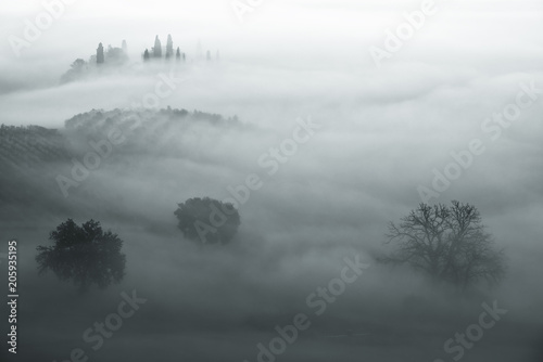 Beautiful foggy sunrise in Tuscany, Italy with separate trees under the fog. Natural misty background in minimalism style - 205935195