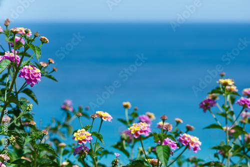 In de dag Cyprus lantana flowers against the blue sea, postcard, background for tourist booklet