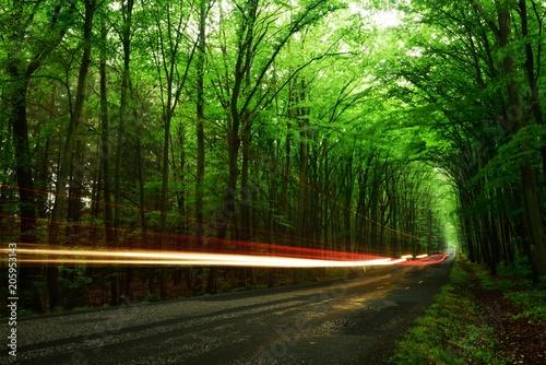 Fotobehang Groene car passing through the spring forest
