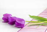 A bunch of purple tulips on a white wooden table. - 205959945
