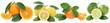 Collage Orangen Zitrone Mandarine Früchte in einer Reihe Freisteller freigestellt isoliert