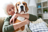 Portrait of elegant senior woman hugging pet dog tenderly and smiling happily while enjoying weekend at home sitting on comfortable couch in modern apartment, focus on beagle dog in foreground - 205973501