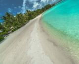 Palm Trees on Tropical Beach - 206007714