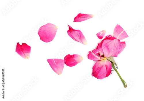 Foto Murales Withered red rose petals isolated on white background