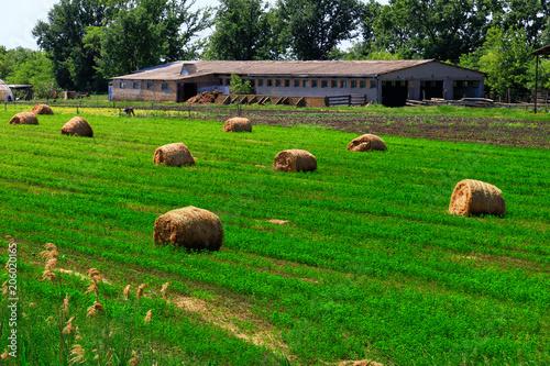 Fotobehang Groene Hay bale in the countryside