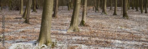 Buchenwald im Winter,  Naturpark Hohe Mark, Münsterland, Nordrhein-Westfalen, Deutschland, Europa - 206033324
