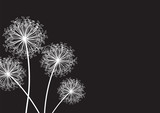 dandelion set of three