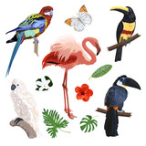 Set of exotic birds: parrot, Toucan, flamingo. Tropical leaves and flowers. - 206040188