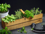 Herbs in old wood box - 206051155