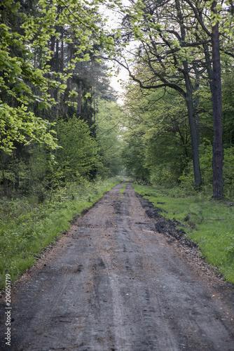 Aluminium Weg in bos droga przez las