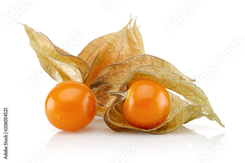 Poster Physalis