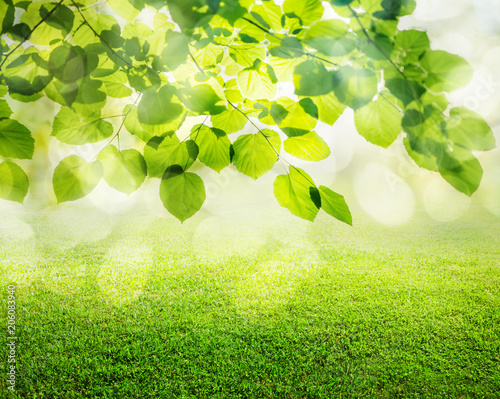 Canvas Natuur natural grass background