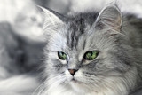 Portrait of a cat - 206084912