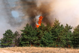 Development of forest fire. Flame is starting damage of trunk - 206085364
