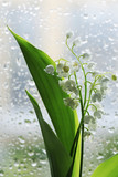 Lilies of the Valley - 206092949