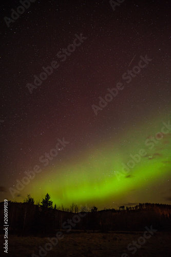 Fotobehang Chocoladebruin Aurora or NOrthern Lights above a forest in Alberta, Canada