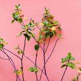 Plant on pink. Green. Minimal fashion design - 206122738