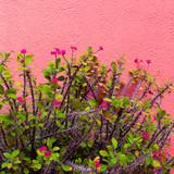 Tropical Plant on pink. Cactus. Minimal fashion design - 206122765
