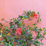 Plant on pink. Flowers. Minimal fashion design - 206122786