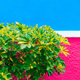 Plant on the wall concept. Tropical green Minimal plant fashion design - 206123501