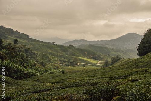 Wall mural Widok na pola herbaty w Malezji